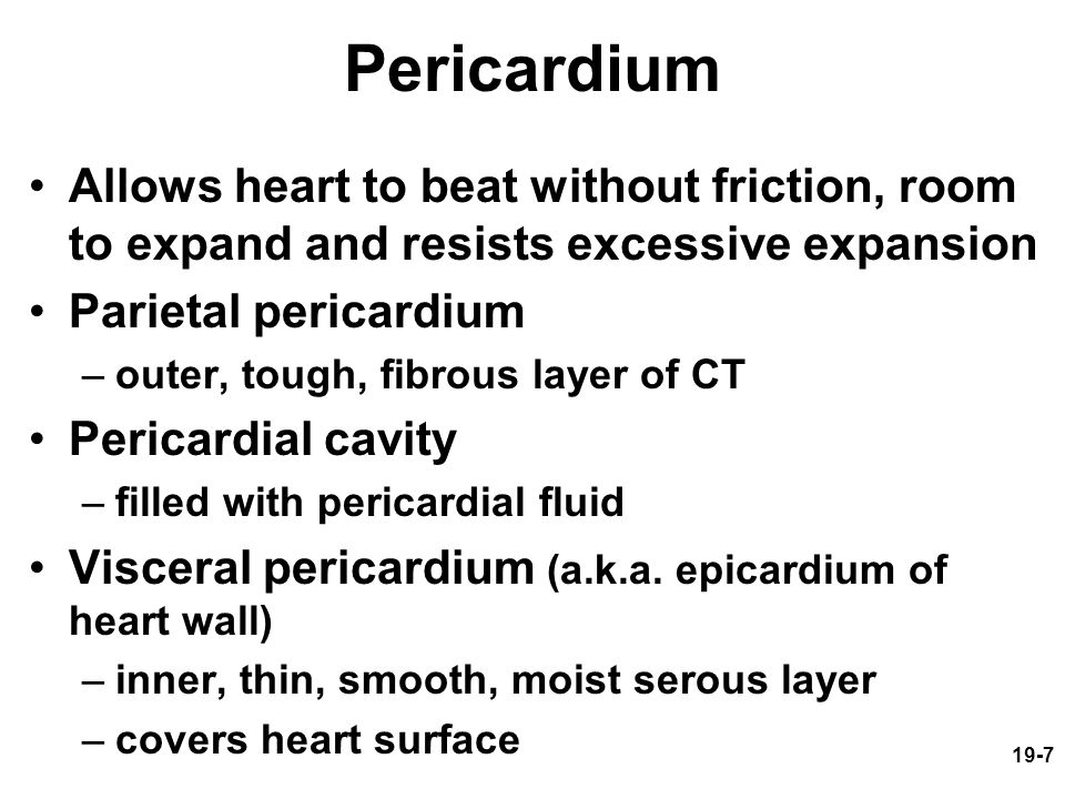 Pericardium Allows heart to beat without friction, room to expand and resists excessive expansion. Parietal pericardium.