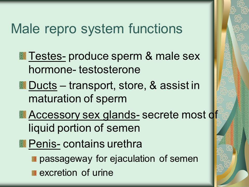 Have sperm develpoment and ejaculation Synthia