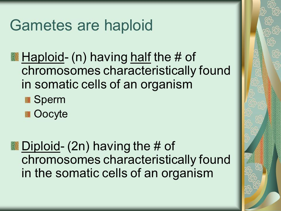 Gametes are haploid Haploid- (n) having half the # of chromosomes characteristically found in somatic cells of an organism.