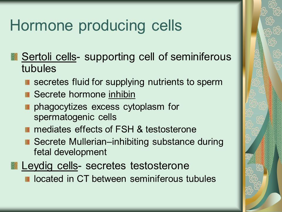 Hormone producing cells