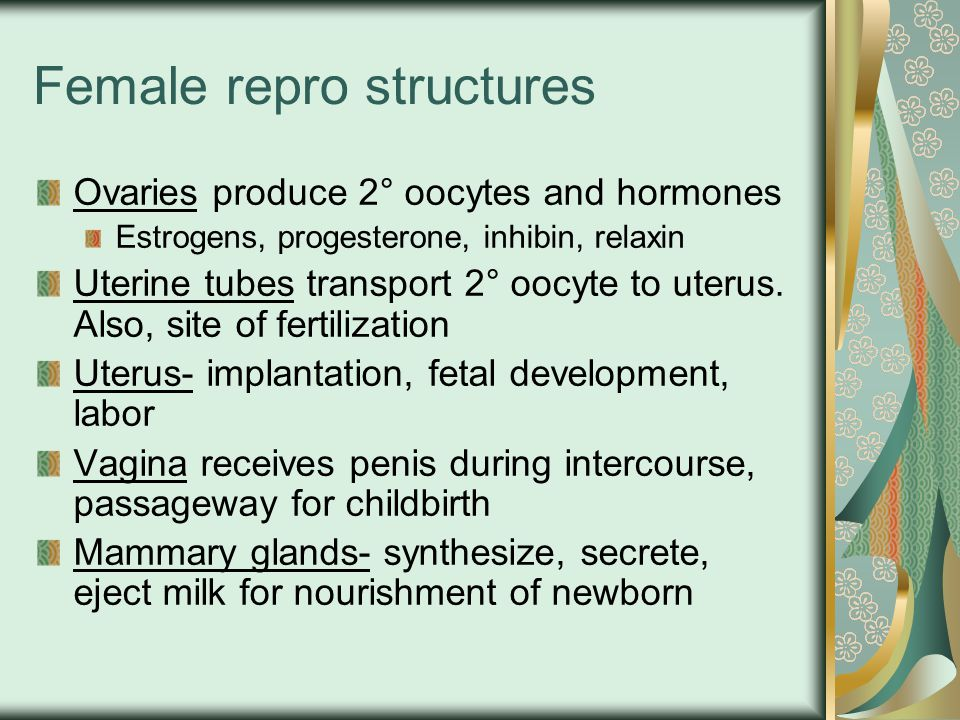 Female repro structures