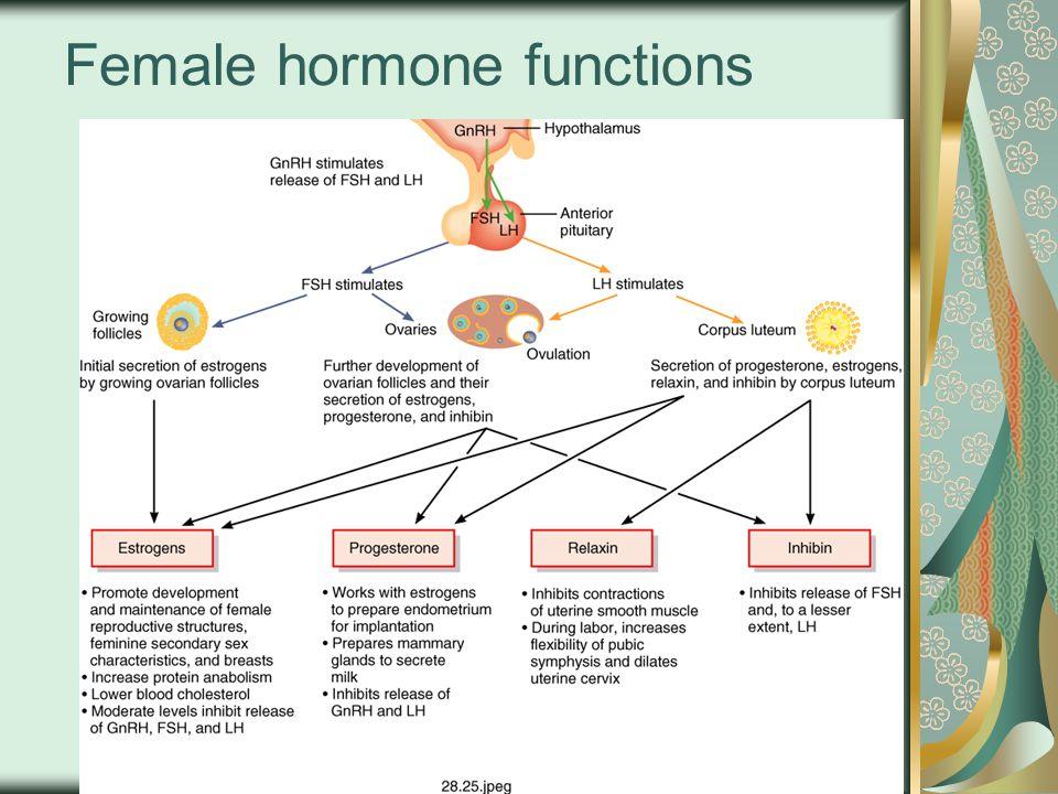 Female hormone functions
