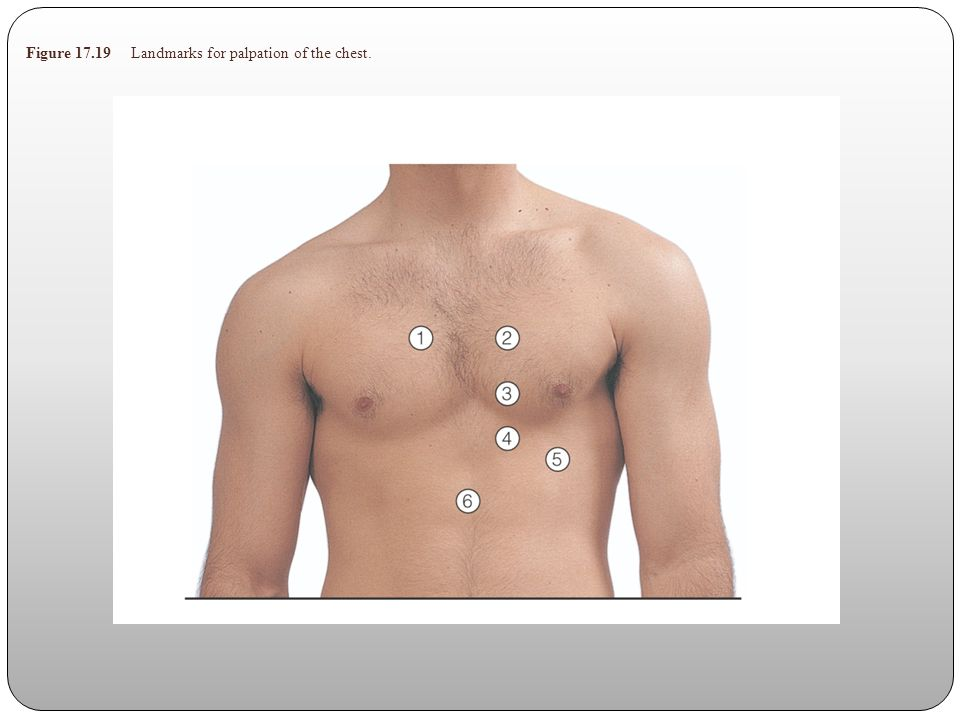 Figure 17.19 Landmarks for palpation of the chest.