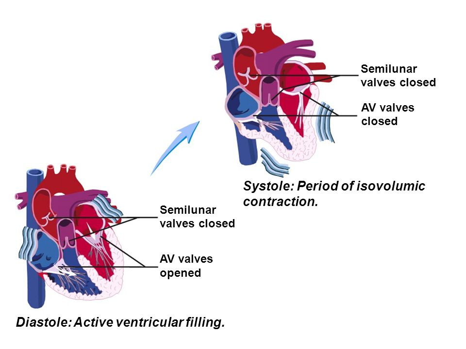 Systole: Period of isovolumic contraction.