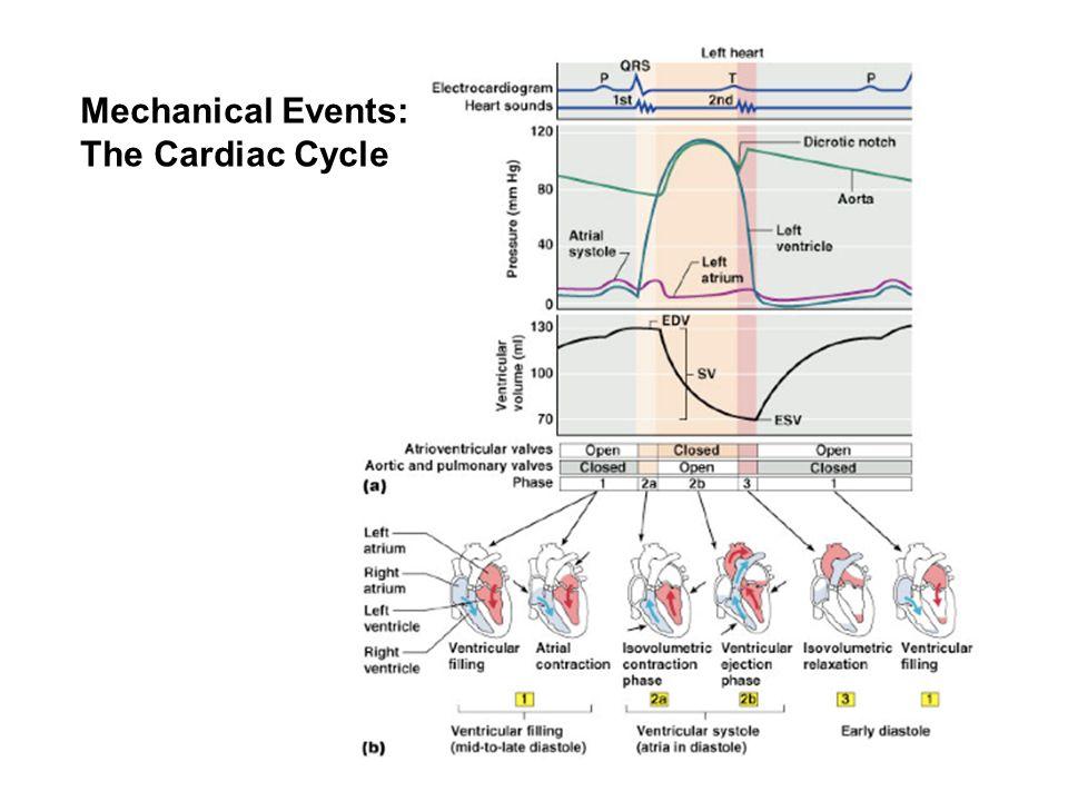 Mechanical Events: The Cardiac Cycle