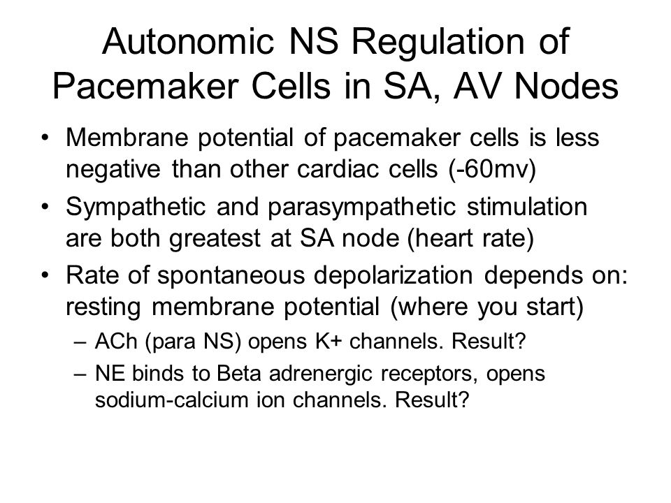 Autonomic NS Regulation of Pacemaker Cells in SA, AV Nodes