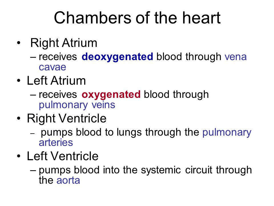 Chambers of the heart Right Atrium Left Atrium Right Ventricle