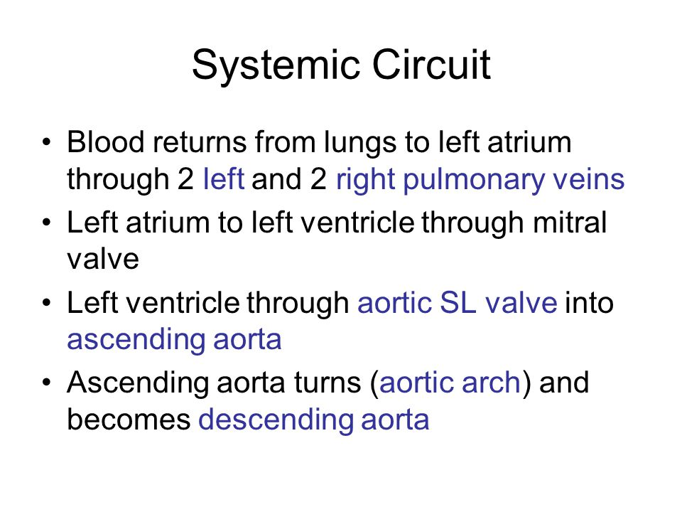 Systemic Circuit Blood returns from lungs to left atrium through 2 left and 2 right pulmonary veins.