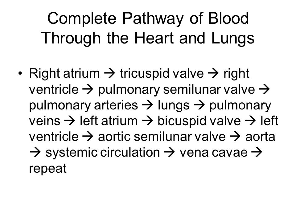 Complete Pathway of Blood Through the Heart and Lungs