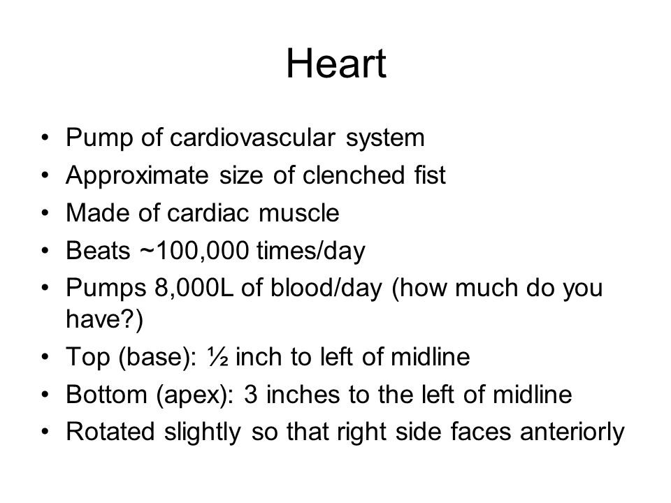 Heart Pump of cardiovascular system Approximate size of clenched fist