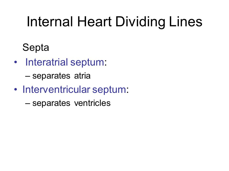 Internal Heart Dividing Lines