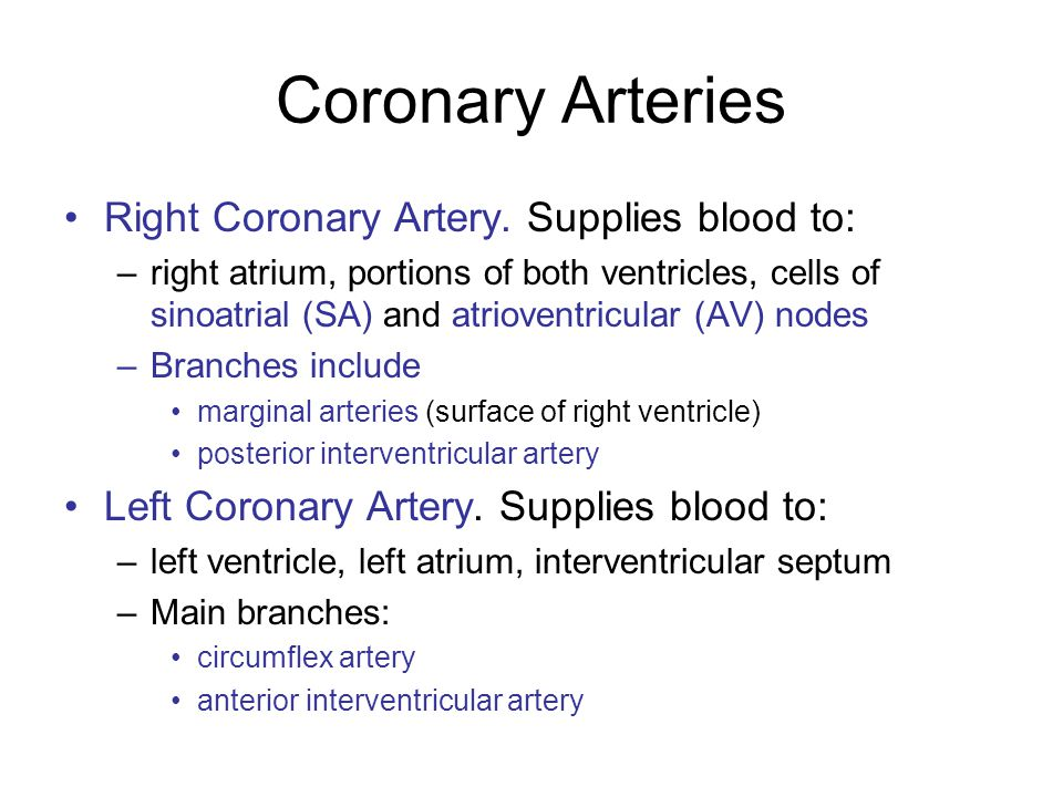 Coronary Arteries Right Coronary Artery. Supplies blood to: