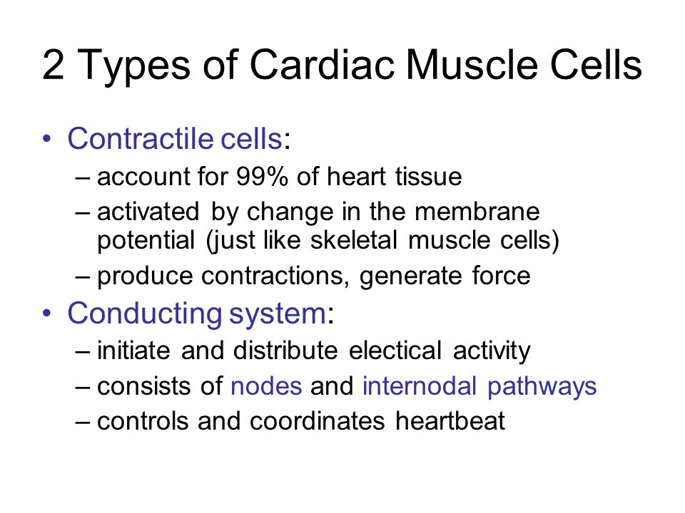 2 Types of Cardiac Muscle Cells