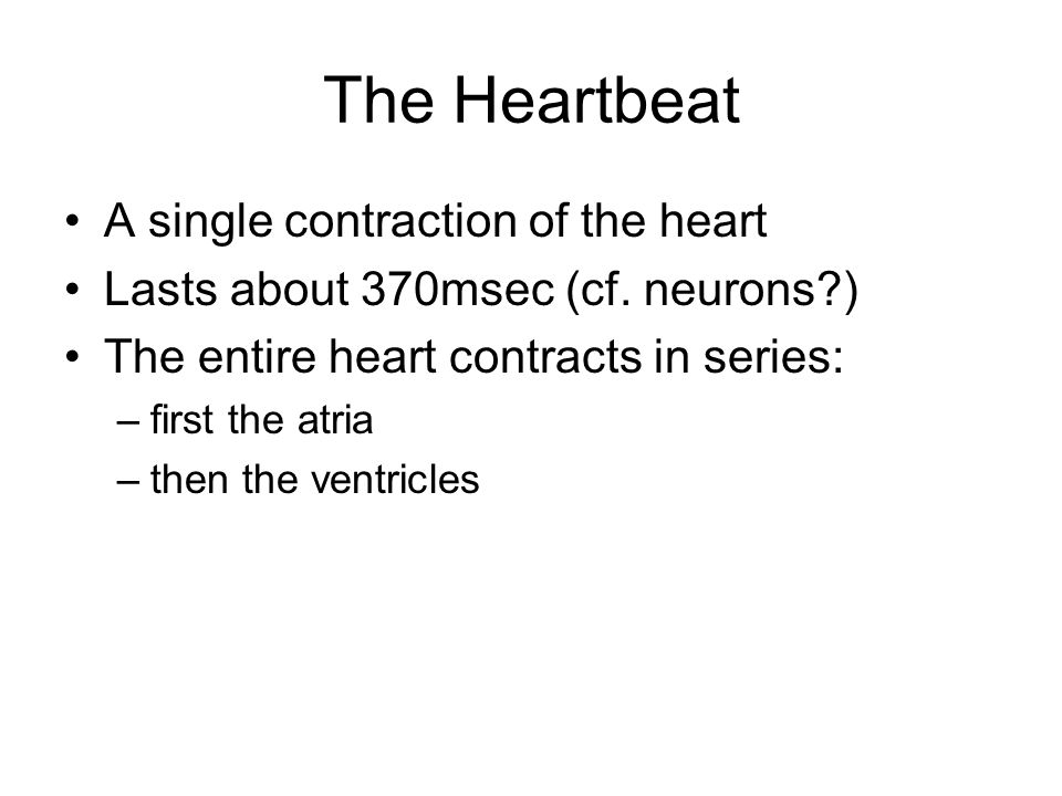 The Heartbeat A single contraction of the heart