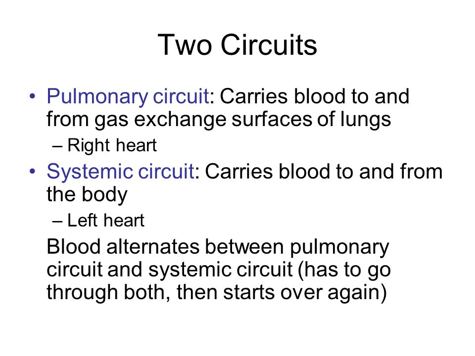 Two Circuits Pulmonary circuit: Carries blood to and from gas exchange surfaces of lungs. Right heart.
