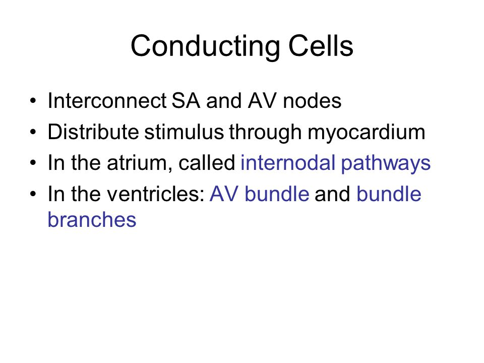 Conducting Cells Interconnect SA and AV nodes