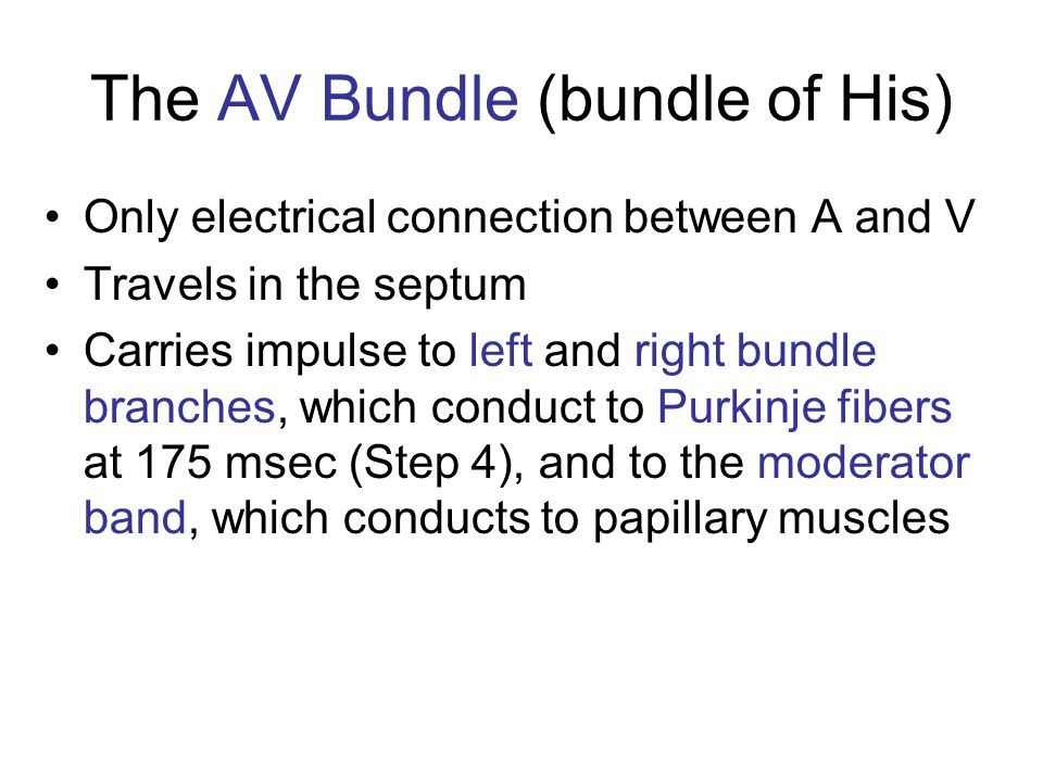 The AV Bundle (bundle of His)