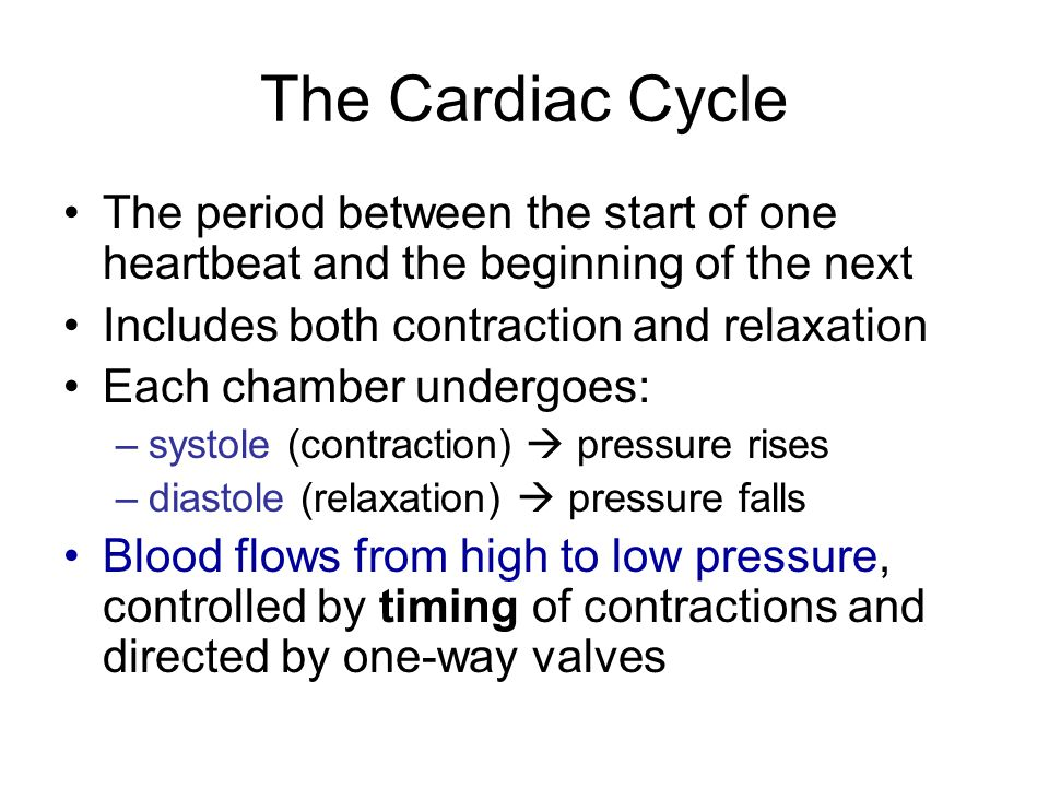 The Cardiac Cycle The period between the start of one heartbeat and the beginning of the next. Includes both contraction and relaxation.