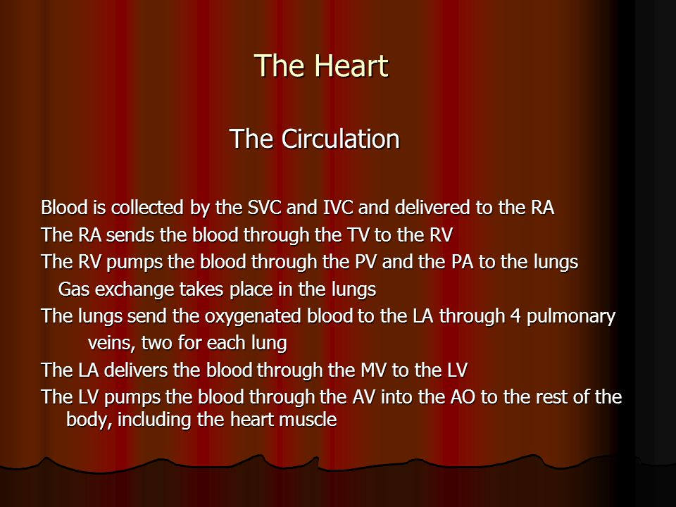 The Heart The Circulation