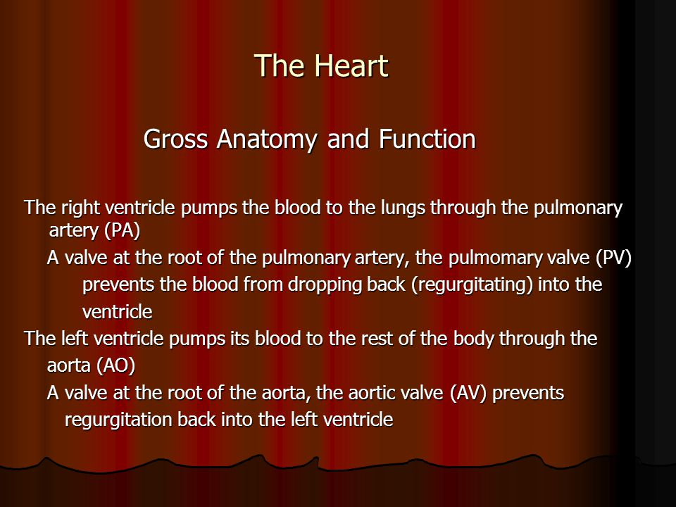 The Heart Gross Anatomy and Function