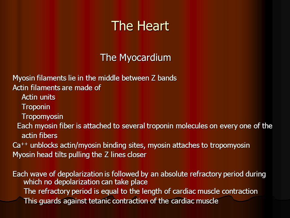 The Heart The Myocardium
