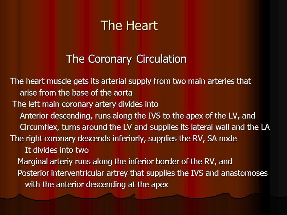 The Heart The Coronary Circulation