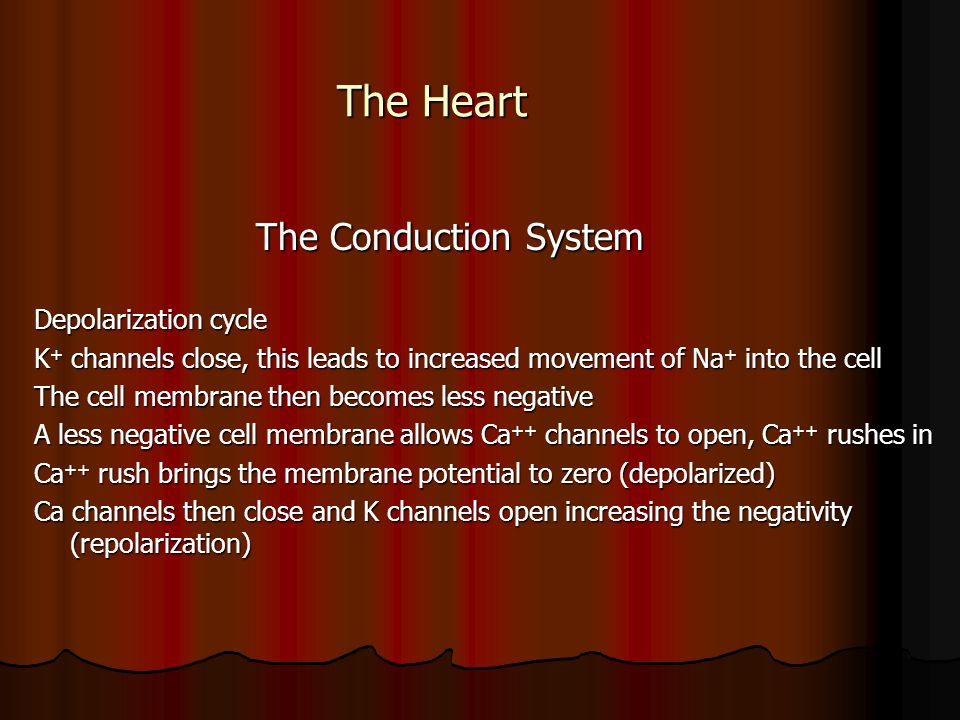 The Heart The Conduction System Depolarization cycle
