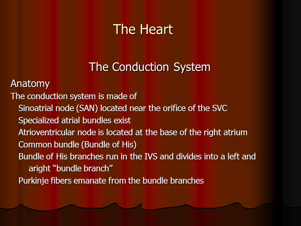 The Conduction System The Heart Anatomy
