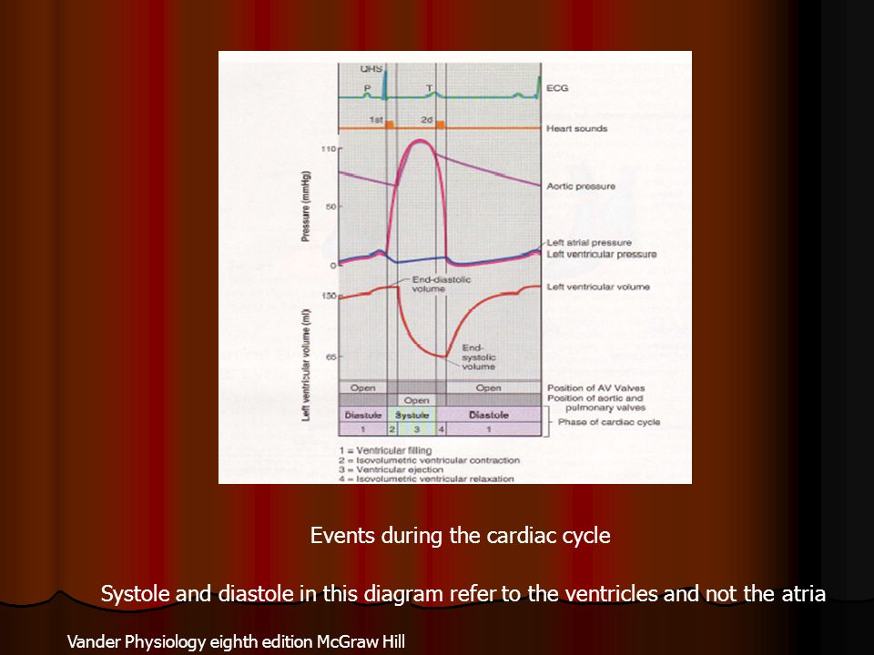 Events during the cardiac cycle