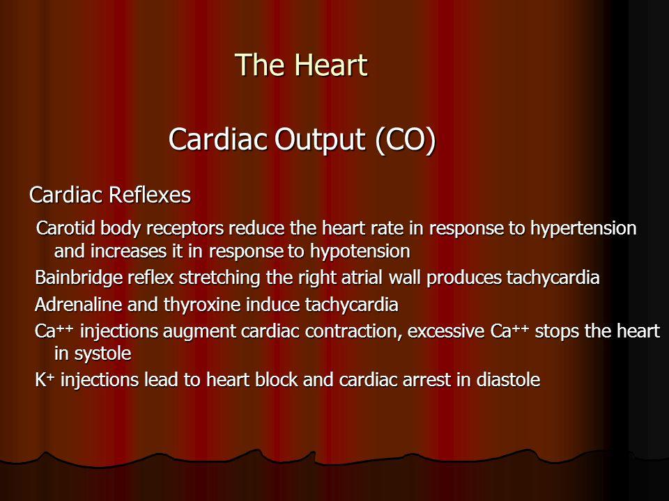 The Heart Cardiac Output (CO) Cardiac Reflexes