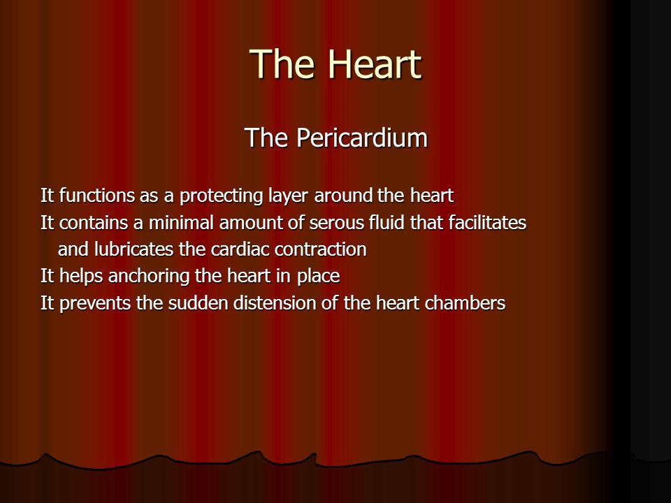 The Heart The Pericardium