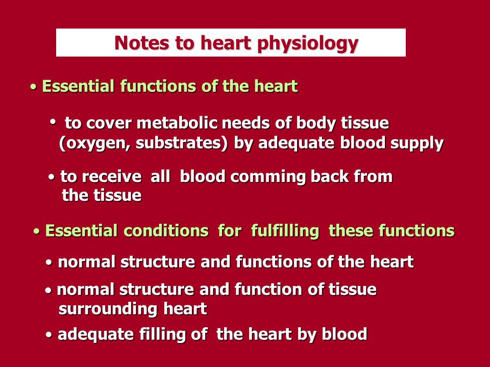 Notes to heart physiology