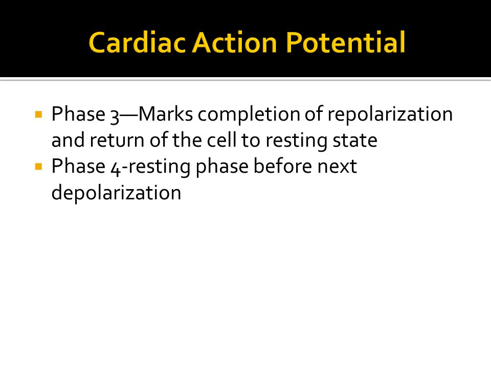 Cardiac Action Potential