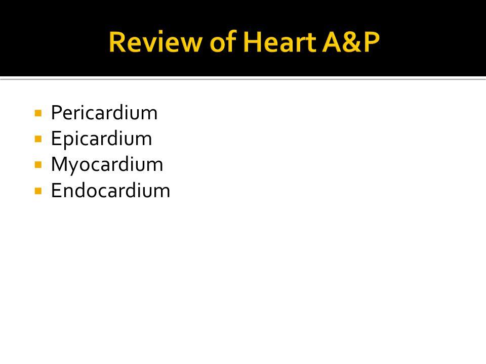 Review of Heart A&P Pericardium Epicardium Myocardium Endocardium