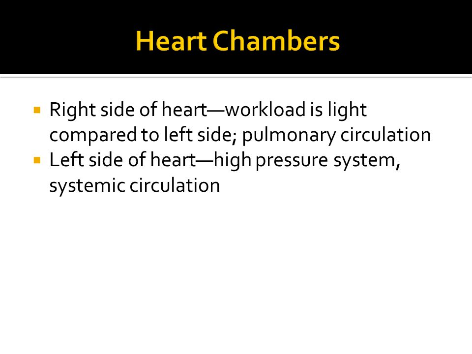 Heart Chambers Right side of heart—workload is light compared to left side; pulmonary circulation.