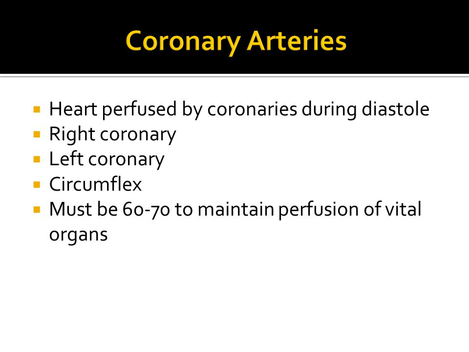 Coronary Arteries Heart perfused by coronaries during diastole