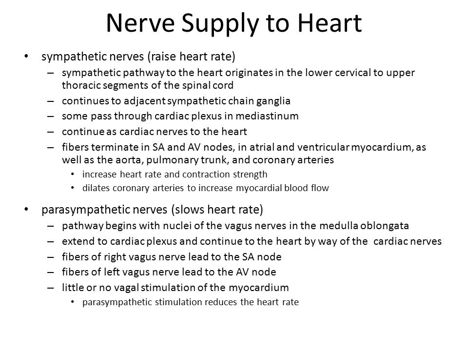 Nerve Supply to Heart sympathetic nerves (raise heart rate)