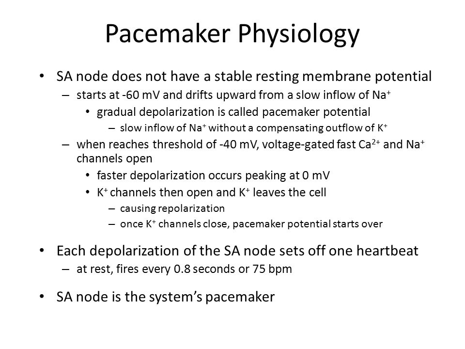 Pacemaker Physiology SA node does not have a stable resting membrane potential. starts at -60 mV and drifts upward from a slow inflow of Na+