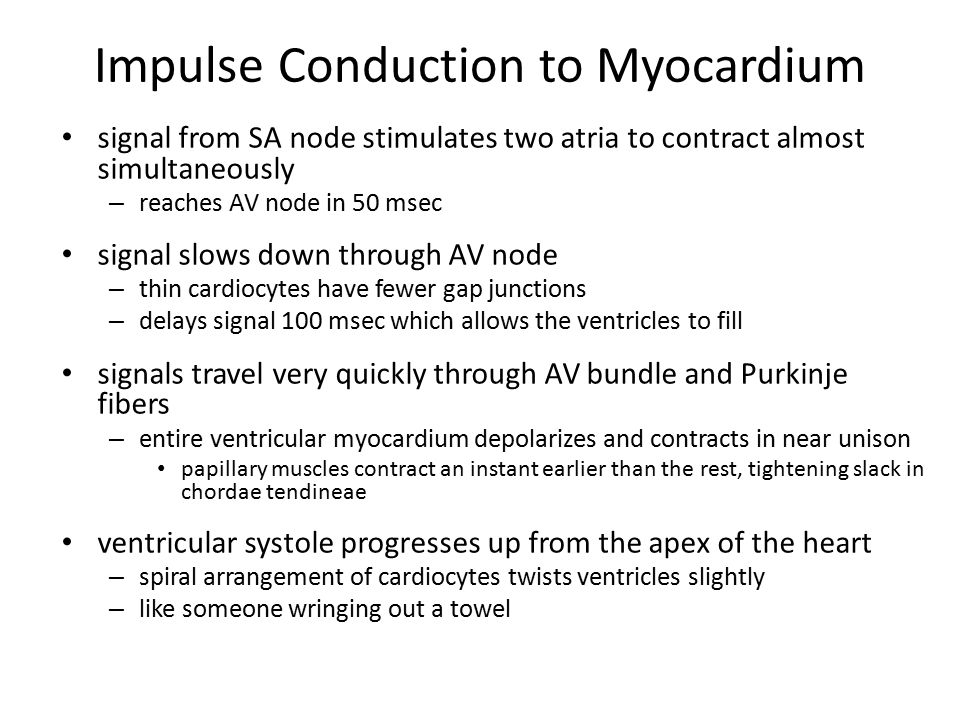Impulse Conduction to Myocardium