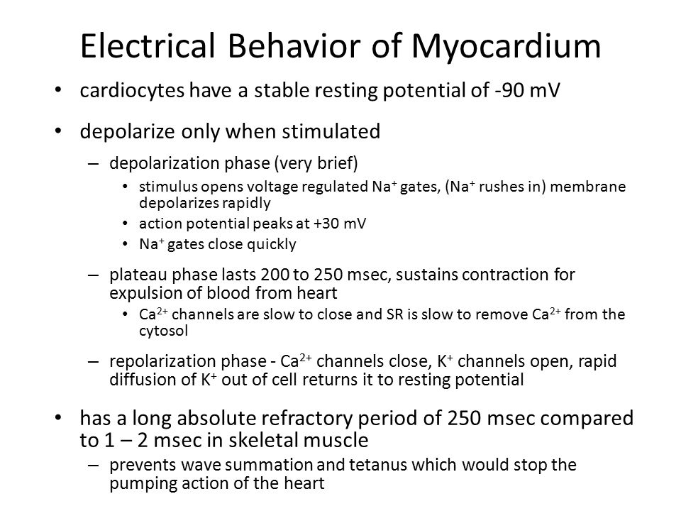 Electrical Behavior of Myocardium