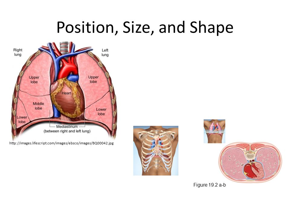 Position, Size, and Shape