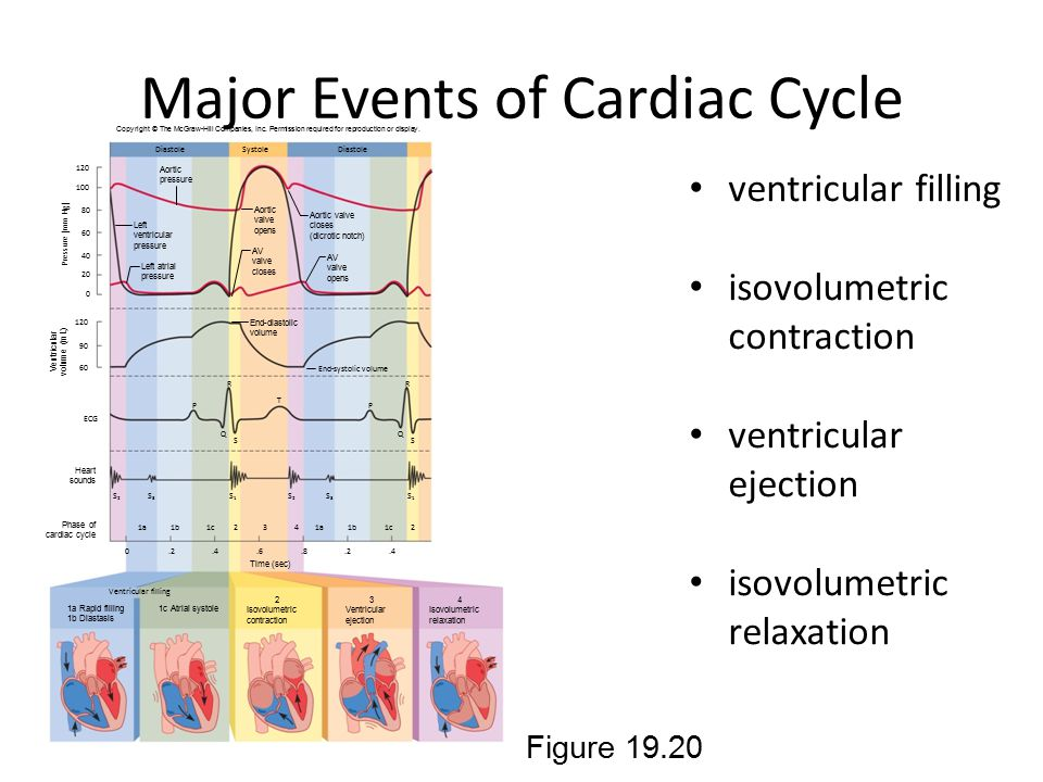 Major Events of Cardiac Cycle