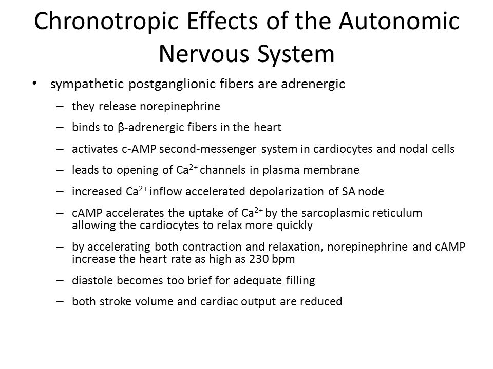 Chronotropic Effects of the Autonomic Nervous System