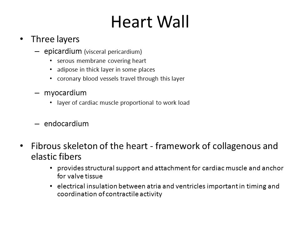 Heart Wall Three layers