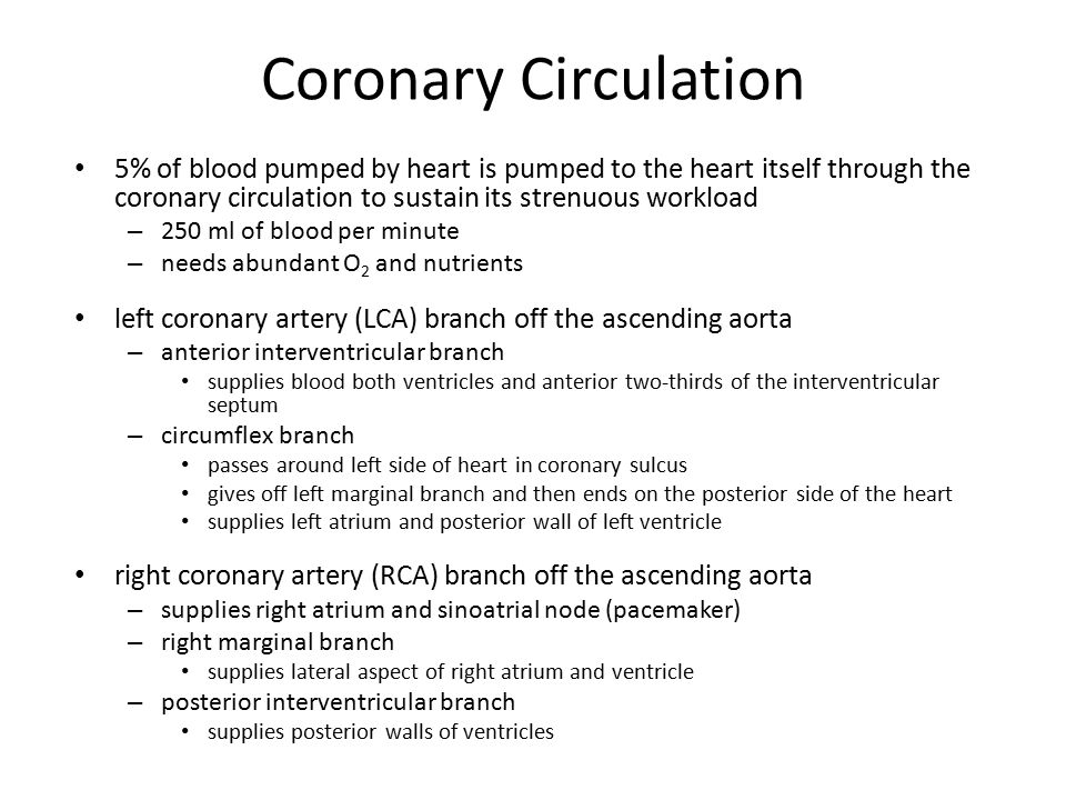 Coronary Circulation 5% of blood pumped by heart is pumped to the heart itself through the coronary circulation to sustain its strenuous workload.