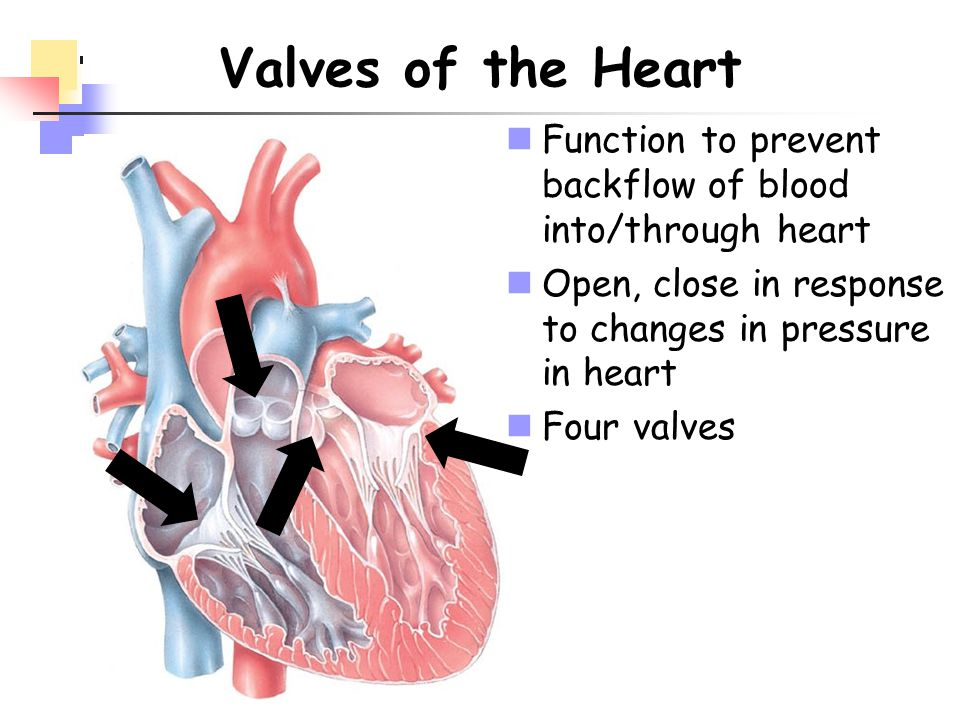 Valves of the Heart Function to prevent backflow of blood into/through heart. Open, close in response to changes in pressure in heart.