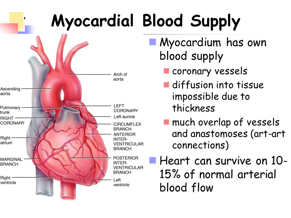 Myocardial Blood Supply
