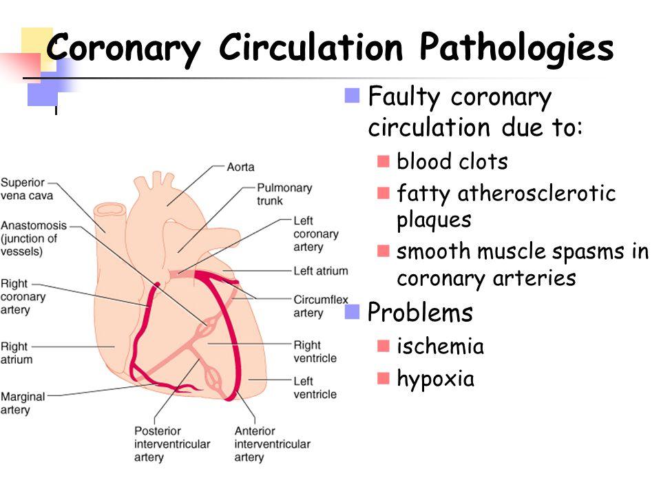 Coronary Circulation Pathologies