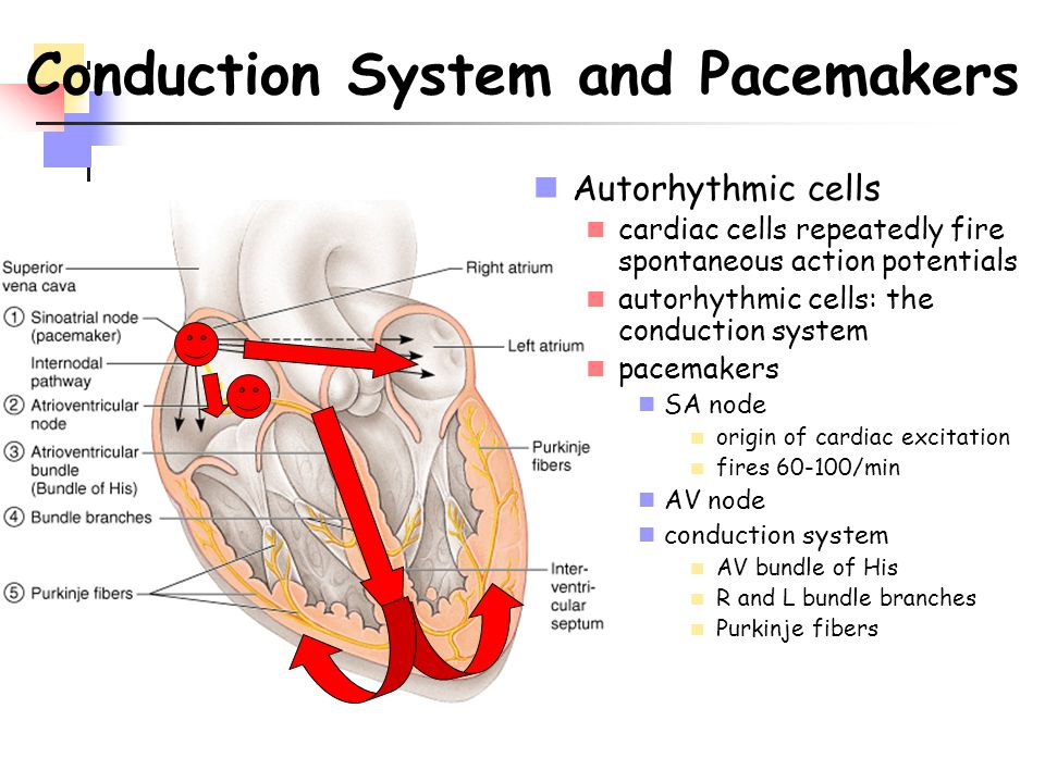 Conduction System and Pacemakers