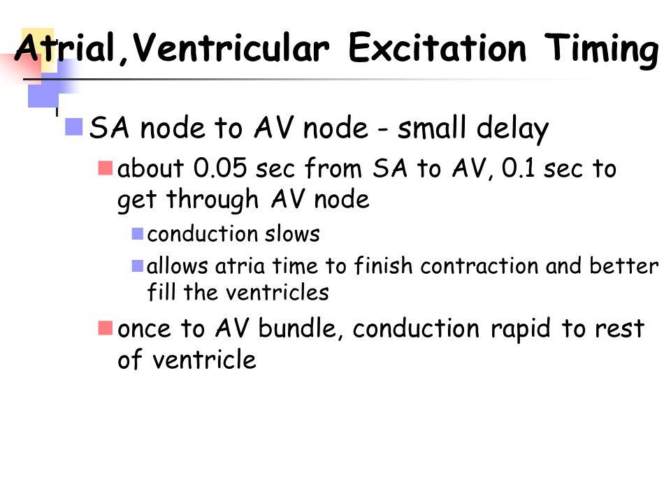Atrial,Ventricular Excitation Timing